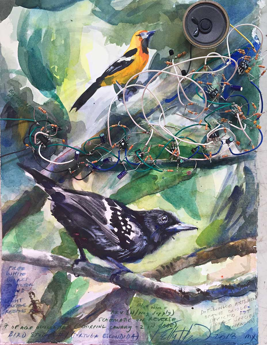 Hacking Natures Musicians Audio Sound Effects Circuit Generator The Old West Sounds Analog Electronics And Watercolor On Paper Is Discussed In My Log More Bird Voice Experiments For Video Https Vimeocom 297499948