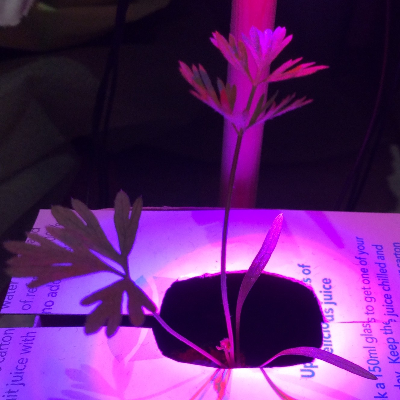 Growing Vegetables In Sealed Containers Wire Wrapped Circuit Board With Purple Glass More The Stems Are Very Elongated Where Leaves Grow Upwards Until They Almost Touching Leds So It Seems As Though Would Prefer To Have