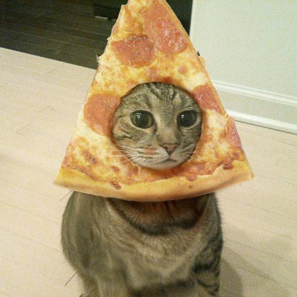 pizza-cat